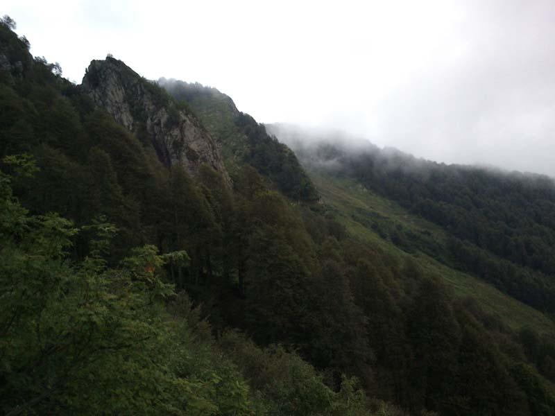 Горные леса Ачишхо