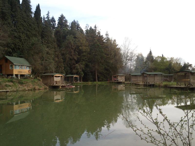 Озеро, роща из пробкового дуба и секвой
