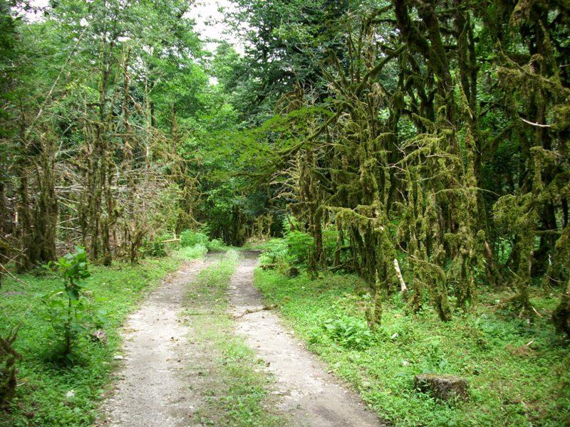 Поход в Субтропический лес