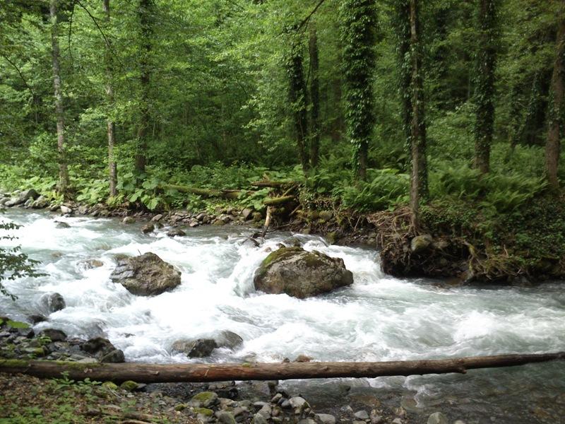 Леса и реки Кавказа