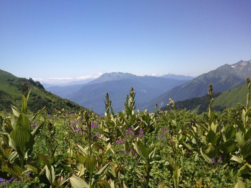 Лето в Горах Сочи