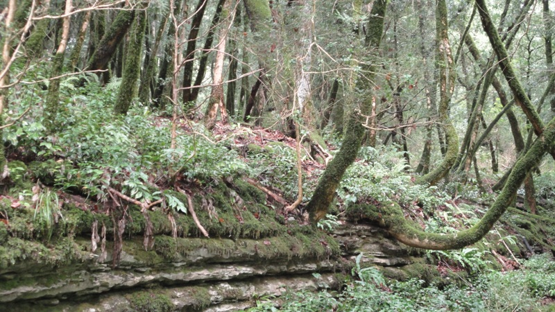 Поход в Самшитовый лес